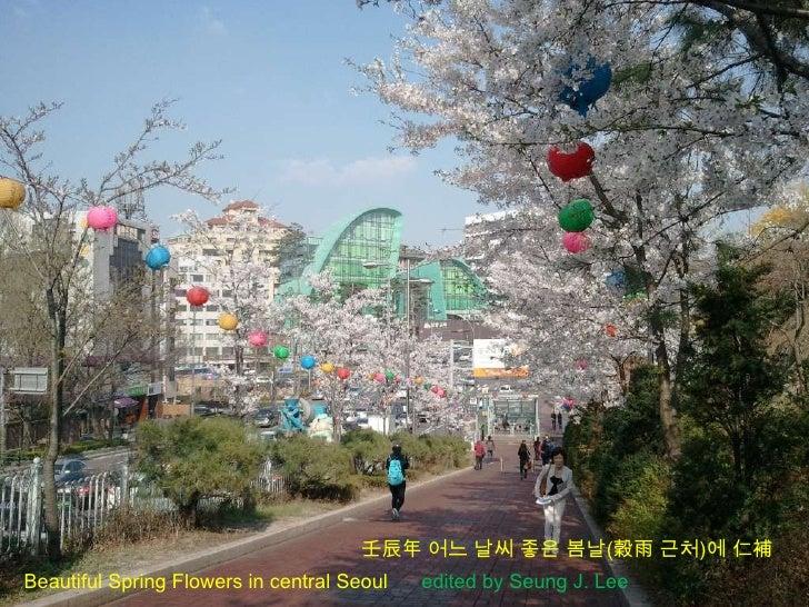 壬辰年 어느 날씨 좋은 봄날(穀雨 근처)에 仁補Beautiful Spring Flowers in central Seoul   edited by Seung J. Lee