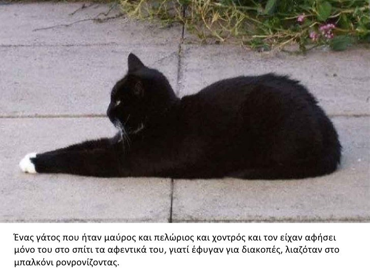 Ένας γάτος που ήταν μαύρος και πελώριος και χοντρός και τον είχαν αφήσειμόνο του στο σπίτι τα αφεντικά του, γιατί έφυγαν γ...