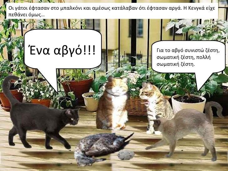 Οι γάτοι έφτασαν στο μπαλκόνι και αμέσως κατάλαβαν ότι έφτασαν αργά. Η Κενγκά είχεπεθάνει όμως…        Ένα αβγό!!!        ...