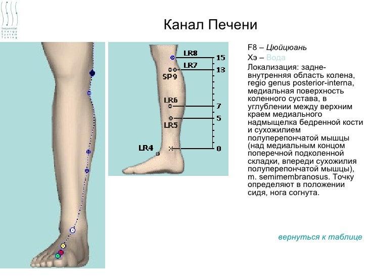 Канал Печени          F8 – Цюйцюань          Хэ – Вода          Локализация: задне-          внутренняя область колена,   ...