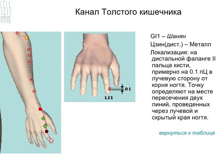 Канал Толстого кишечника                GI1 – Шанян                Цзин(дист.) – Металл                Локализация: на    ...