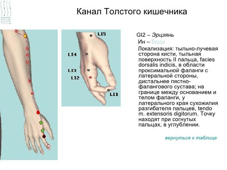 Канал Толстого кишечника            GI2 – Эрцзянь            Ин – Вода            Локализация: тыльно-лучевая            с...
