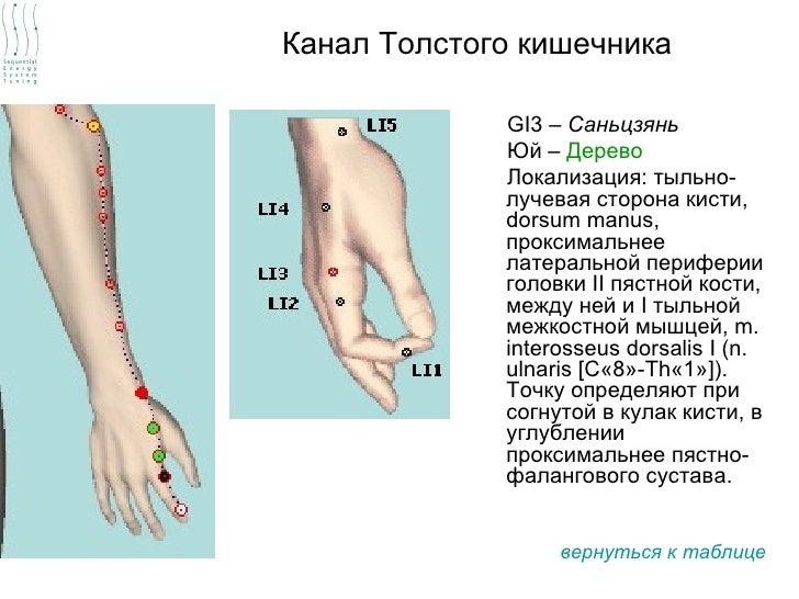 Канал Толстого кишечника             GI3 – Саньцзянь             Юй – Дерево             Локализация: тыльно-             ...