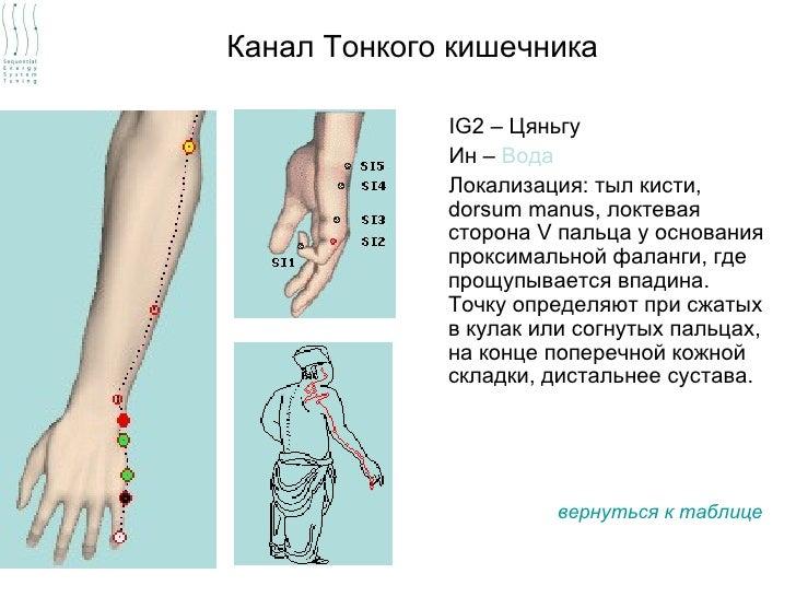 Канал Тонкого кишечника             IG2 – Цяньгу             Ин – Вода             Локализация: тыл кисти,             dor...