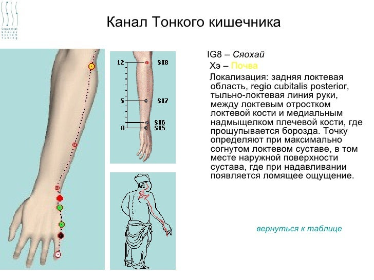 Канал Тонкого кишечника             IG8 – Сяохай              Хэ – Почва              Локализация: задняя локтевая        ...