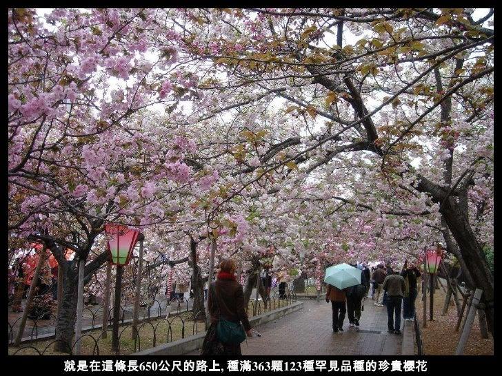 大阪賞櫻名所─ 造幣局 ~~日本罕見櫻花 Slide 3