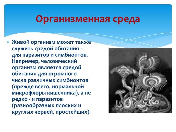 Организменная Среда Обитания Реферат hoppertopikva Организменная Среда Обитания Доклад