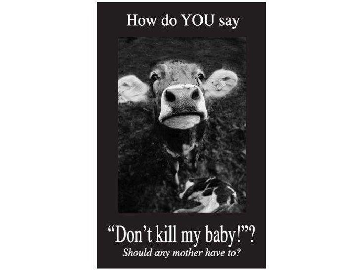 乳品業的乳牛:全世界最受剝削的母親