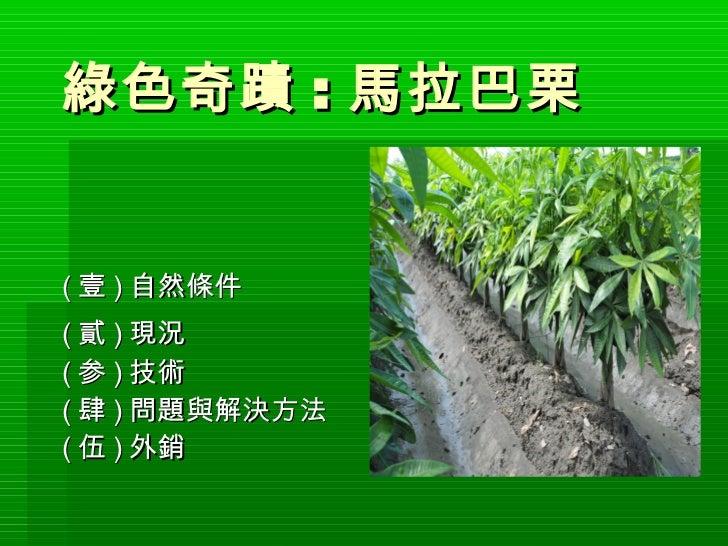 綠色奇蹟 : 馬拉巴栗( 壹 ) 自然條件( 貳 ) 現況( 参 ) 技術( 肆 ) 問題與解決方法( 伍 ) 外銷