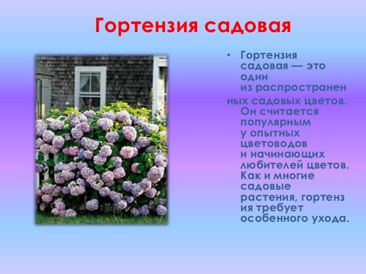 Цветы которые цветут в июле 91