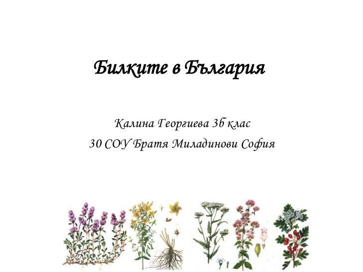 Билките в България    Калина Георгиева 3б клас30 СОУ Братя Миладинови София