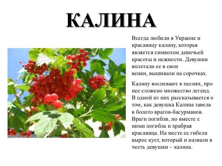 Символы украины калина реферат 5697