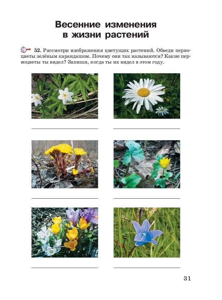 Как изменяются растения осенью картинки