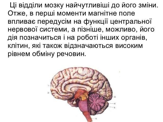 Ці відділи мозку найчутливіші до його зміни.Отже, в перші моменти магнітне полевпливає передусім на функції центральноїнер...