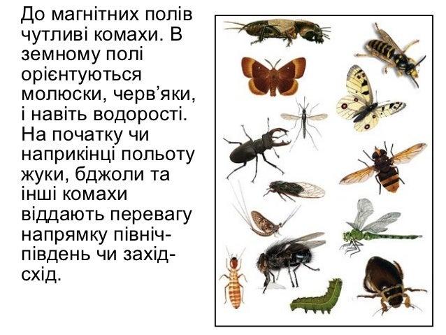 До магнітних полівчутливі комахи. Вземному поліорієнтуютьсямолюски, черв'яки,і навіть водорості.На початку чинаприкінці по...