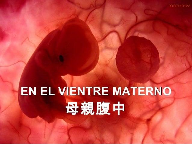 XuY/110122     EN EL VIENTRE MATERNO                    母 親 腹中Um feto de poucas semanas encontra-se               no inter...