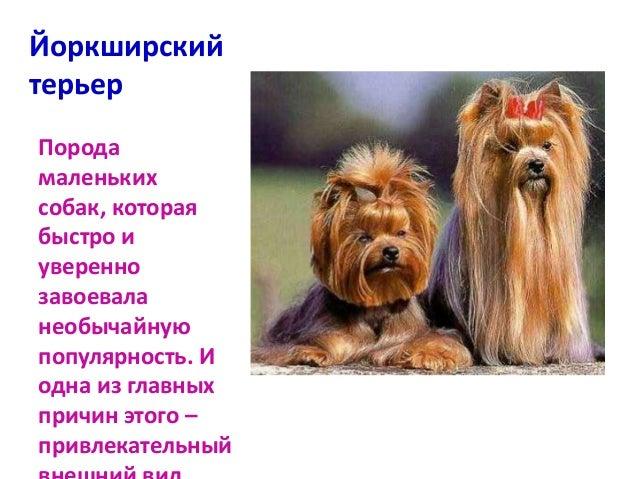 какие бывают собаки породы фото
