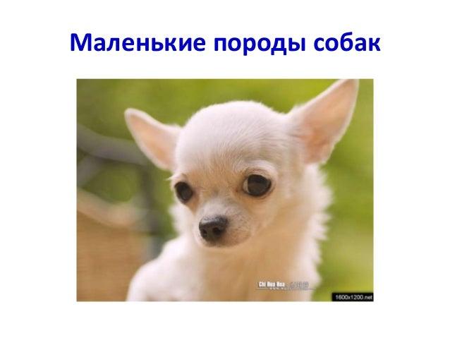 какие бывают породы у собак