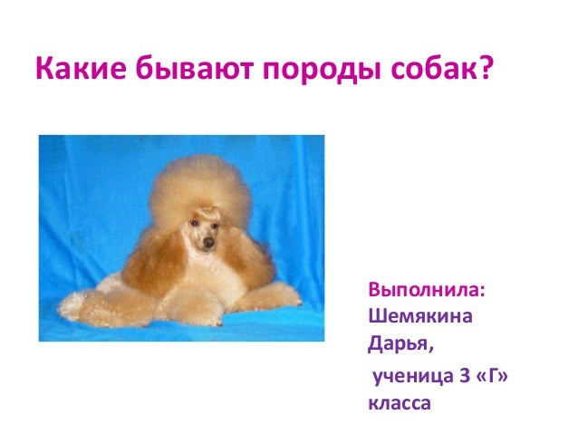 Какие бывают породы собак?                  Выполнила:                  Шемякина                  Дарья,                  ...