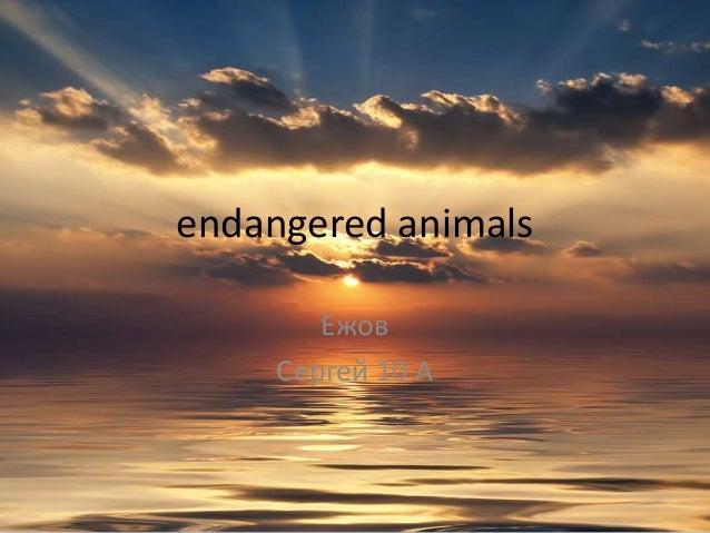 endangered animals        Ежов     Сергей 10 А