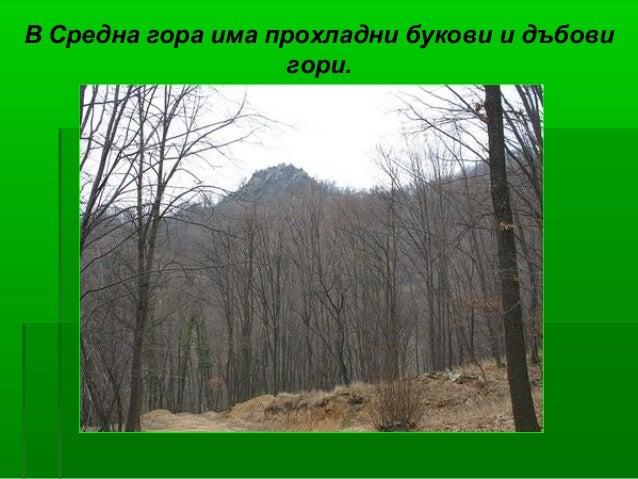 В Средна гора има прохладни букови и дъбови                   гори.