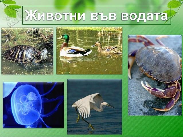 С. Русева – 32 СОУ