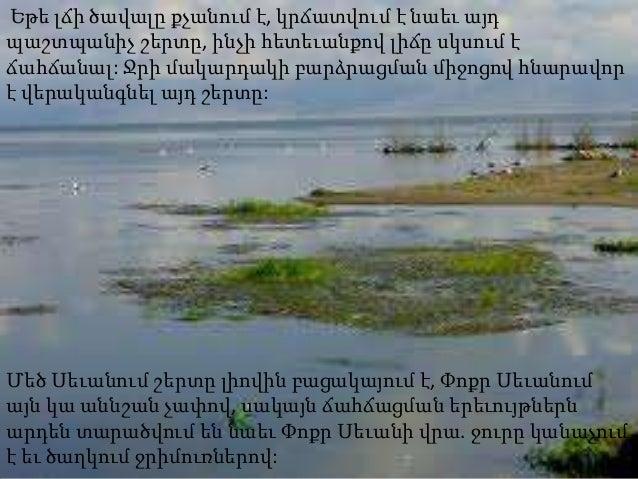 Եթե լճի ծավալը քչանում է, կրճատվում է նաեւ այդպաշտպանիչ շերտը, ինչի հետեւանքով լիճը սկսում էճահճանալ: Ջրի մակարդակի բարձրա...