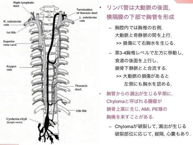 • リンパ管は大動脈の後面,    横隔膜の下部で胸管を形成    – 胸腔内では胸椎の右側,      大動脈と奇静脈の間を上行.      >> 損傷にて右胸水を生じる.    – 第3-4胸椎レベルで左方に移動し,      食道の後面を...