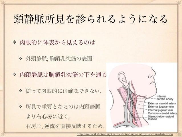 頸静脈所見を診られるようになる肉眼的に体表から見えるのは 外頸静脈; 胸鎖乳突筋の表面内頚静脈は胸鎖乳突筋の下を通る 従って肉眼的には確認できない. 所見で重要となるのは内頸静脈 より右心房に近く, 右房圧, 逆流を直接反映するため.     ...