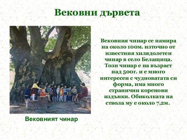 Вековни дървета                  Вековния чинар се намира                  на около 100м. източно от                   изв...