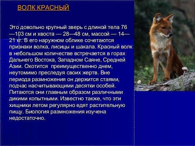 Реферат животные занесенные в красную книгу 3817
