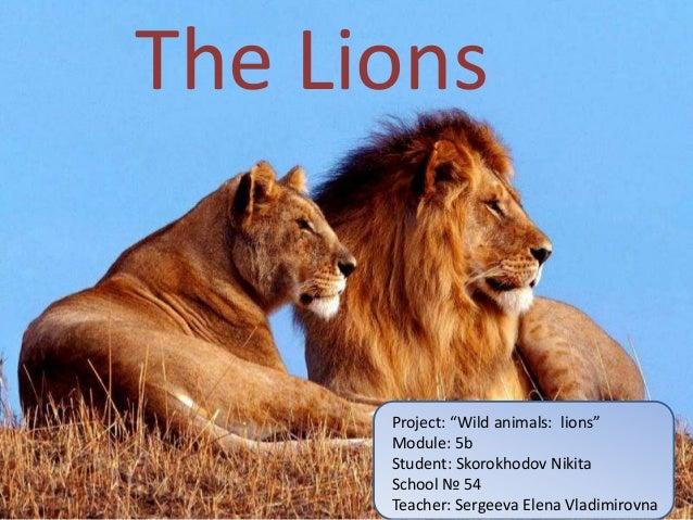 "The Lions      Project: ""Wild animals: lions""      Module: 5b      Student: Skorokhodov Nikita      School № 54      Teach..."