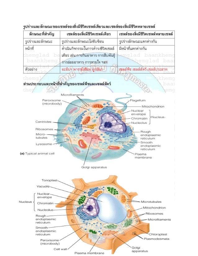 รูปร่างและลักษณะของเซลล์ของสิ่งมีชีวตเซลล์เดียวและเซลล์ของสิ่งมีชีวตหลายเซลล์                                    ิ        ...