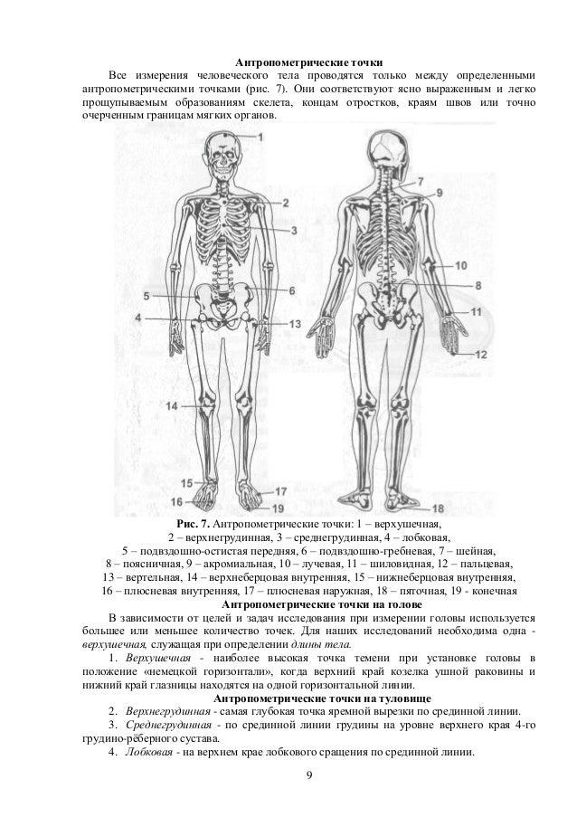 Immunoglobulin Genes 1995