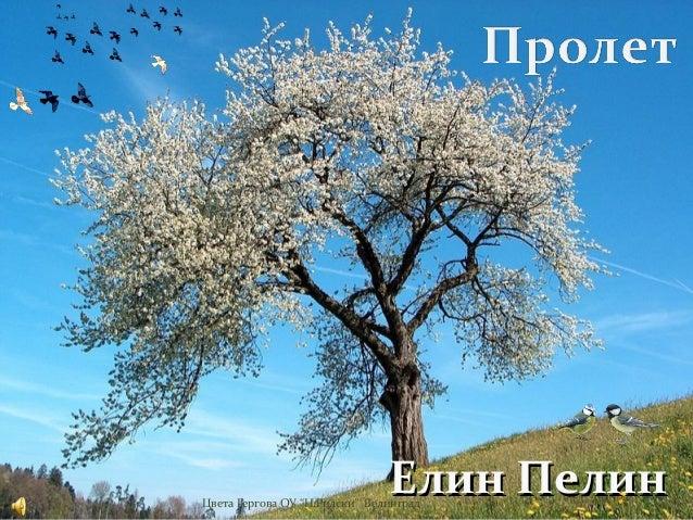 "Елин ПелинЦвета Гергова ОУ ""Н.Рилски"" Велинград"