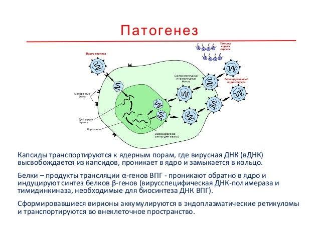 Течение вирусной инфекции