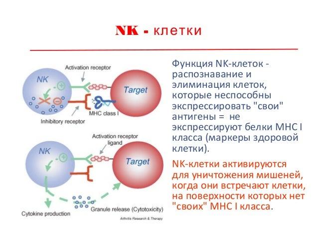 Интерференция = явление антагонизма вирусов Интерференция - помеха, препятствие (англ.) данное явление встречается при вве...