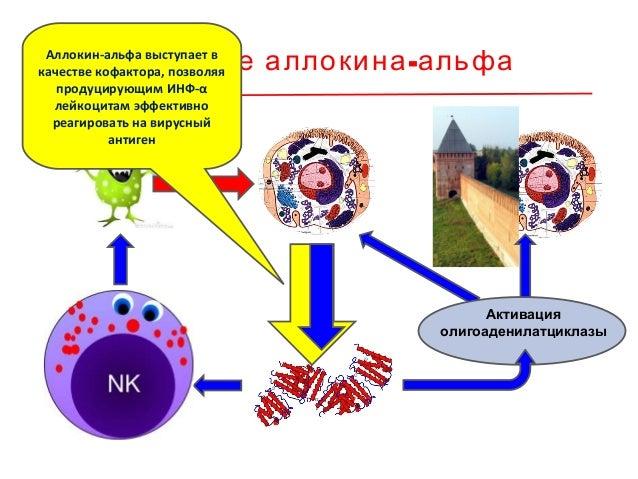 Показания к применению • хроническая папилломавирусная инфекция, вызванная онкогенными вирусами папилломы человека; • хрон...