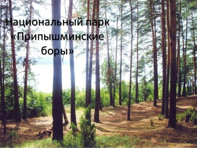 Национальный парк«Припышминскиеборы»