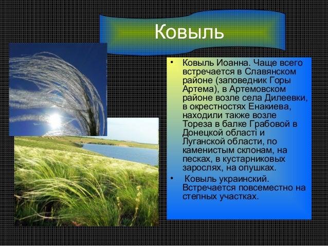 Ковыль •   Ковыль Иоанна. Чаще всего     встречается в Славянском     районе (заповедник Горы     Артема), в Артемовском  ...