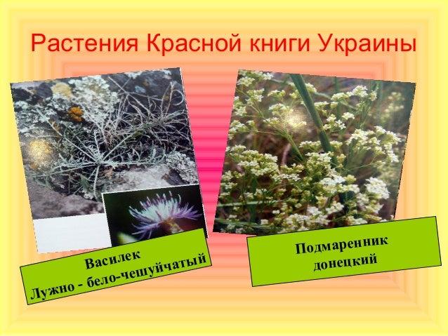Растения Красной книги Украины                                    к               к         Подмаренни        Василе уйчат...