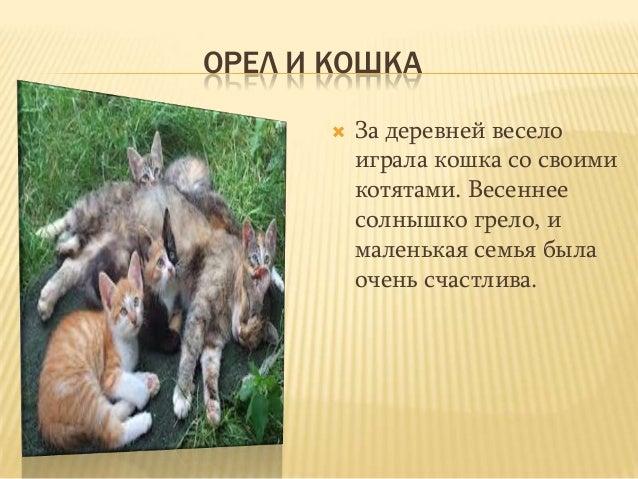 ОРЕЛ И КОШКА За деревней веселоиграла кошка со своимикотятами. Весеннеесолнышко грело, ималенькая семья былаочень счастли...