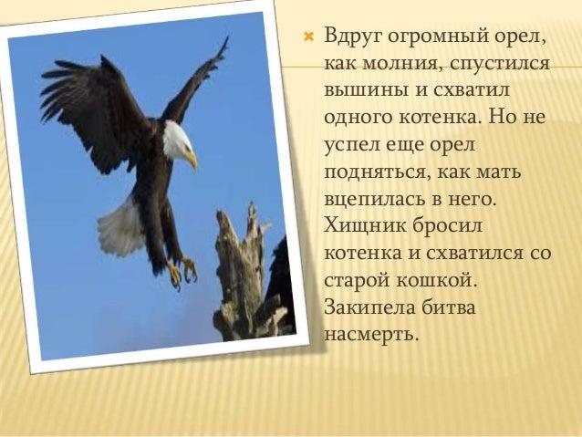  Вдруг огромный орел,как молния, спустилсявышины и схватилодного котенка. Но неуспел еще орелподняться, как матьвцепилась...