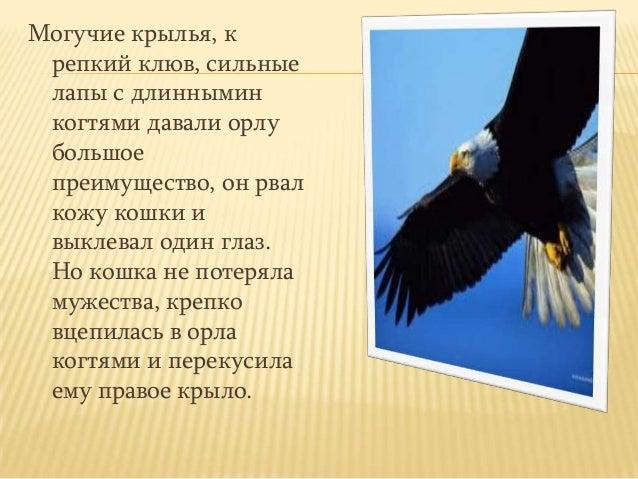 Могучие крылья, крепкий клюв, сильныелапы с длинныминкогтями давали орлубольшоепреимущество, он рвалкожу кошки ивыклевал о...