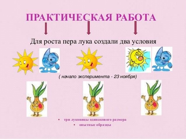 Схема проведения эксперимента в детском саду