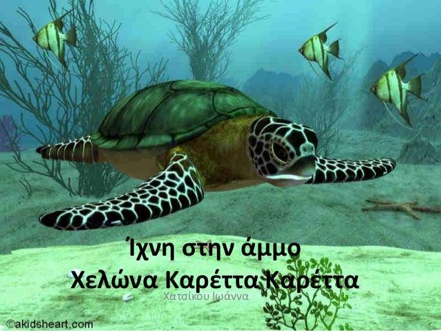 Ίχνη ςτην άμμοΧελϊνα Καρζττα ΚαρζτταΧατσίκου Ιωάννα