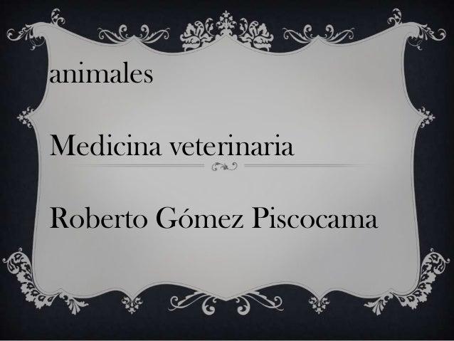 animales Medicina veterinaria Roberto Gómez Piscocama
