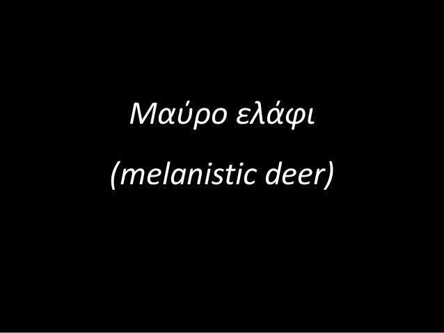 Μαύρο ελάφι (melanistic deer)