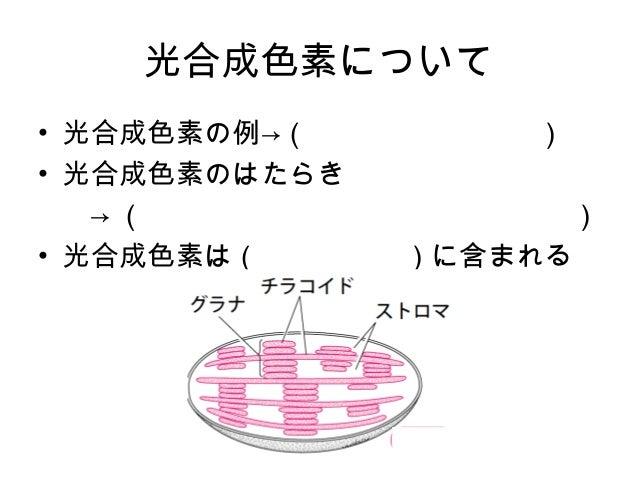 光合成色素の抽出 Slide 2