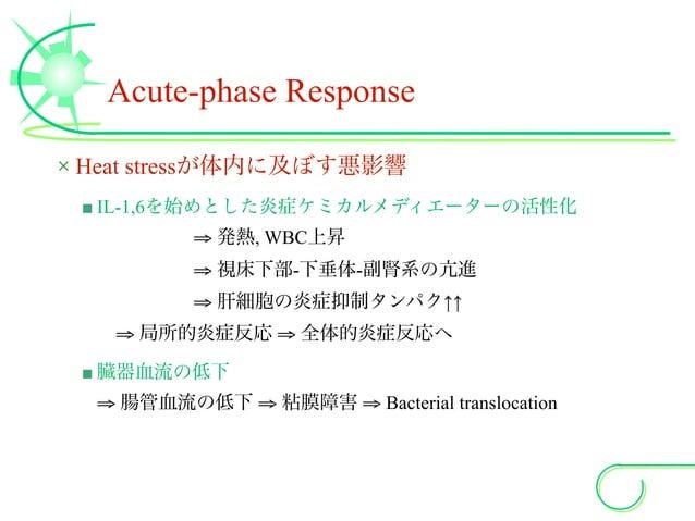 Acute-phase Response × Heat stressが体内に及ぼす悪影響 ■ IL-1,6を始めとした炎症ケミカルメディエーターの活性化 ⇒ 発熱, WBC上昇 ⇒ 視床下部-下垂体-副腎系の亢進 ⇒ 肝細胞の炎症抑制タンパク↑...